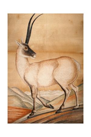 Chiru, 1840