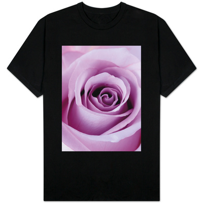 Light Purple Rose