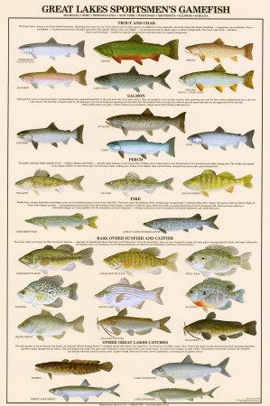 Great Lakes Sportman's Game Fish