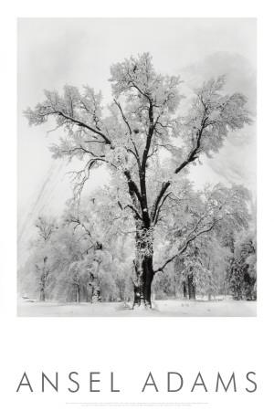 Oak Tree, Snowstorm, Yosemite National Park, 1948
