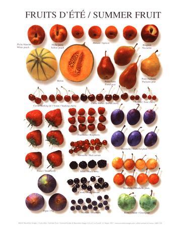 Summer Fruit - Art Print