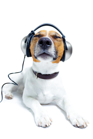 Brown and white terrier wearing a thick brown collar is lying down with headphones over its ears and eyes closed.