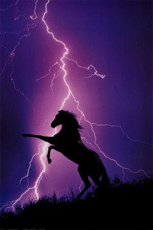 Blitz und Silhouette eines Pferdes