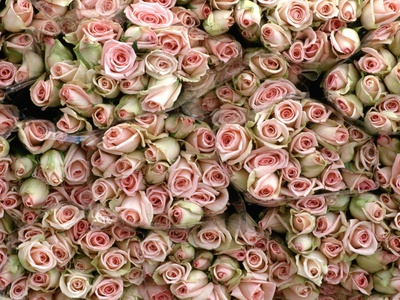 Pink and Cream Rose Bud Bunches