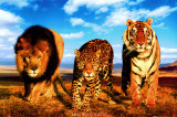 Buy Wild Cats at AllPosters.com
