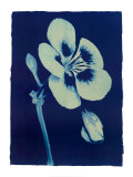 Open Geranium I, 2002