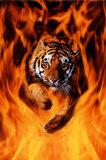 Tigre du Bengale sautant dans les flammes