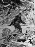 Alleged Photo of Bigfoot Photographic Print
