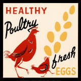 Healthy Poultry-Fresh Eggs Art Print