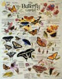 Butterfly Garden Tin Sign