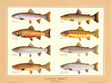 Buy Classic Trout at AllPosters.com