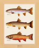 Buy Trout at AllPosters.com