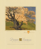The Bishop's Apricot Tree
