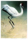 Flood Plane - Whooping Crane