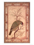 A Barbet (Himalayan Blue-Throated Bird) Jahangir Period, Mughal, 1615