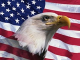 Bald Eagle and American Flag Photographic Print