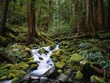 Brook in Sol Duc River Valley