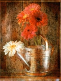 Gerbera Daisies in a Watering Can
