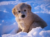 White Puppy Seated in Snow