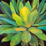 Buy Agave at AllPosters.com