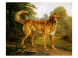 A Golden Retriever on a Path, in Wooded Landscape