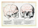 Skull with Phrenologic Indications after Franz Josef Gall