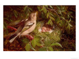 A Chaffinch at Its Nest, 1877