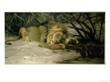 Lion Reclining in a Landscape