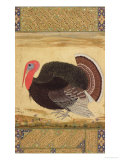A Turkey-Cock, Brought to Jahangir from Goa in 1612, from the Wantage Album, Mughal, circa 1612