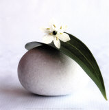 Flower and Pebble