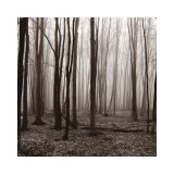 Buy Winter Woods at AllPosters.com