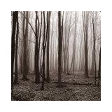 Buy Winter Woods at AllPosters.com