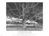NW 1643 Train No. 17 The Birmingham Special Passes a Giant Oak, Max Meadows, Virginia, c.1957