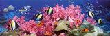 Buy Tropical Fish at AllPosters.com