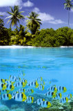 Buy Tropical Scenery II at AllPosters.com