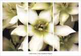 Star of Bethlehem Triptych