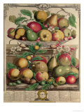 March, from 'Twelve Months of Fruits', by Robert Furber, 1732 Giclee Print