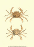 Antique Crab III