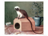 The Favourite Monkey of Carl Linnaeus
