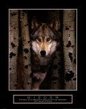 Wisdom: Gray Wolf