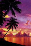 Buy Tahitian Sunset at AllPosters.com