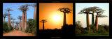 Baobas Madagascar