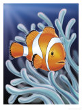 Buy A Clown Fish Swimming by Sea Anemones at AllPosters.com