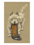 White Scots Terrier with a Black Slipper or Shoe