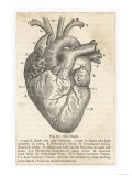 Buy Anatomy of the Heart at AllPosters.com