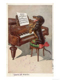 Musical Dachshund Plays a Tune on the Piano
