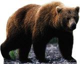 Grizzly Bear Cardboard Cutouts