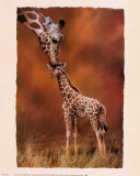 Giraffe Kiss