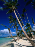 Palm Tree Lined Beach, La Romana, La Romana, Dominican Republic