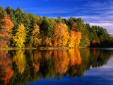 Buy Autumn Trees in New Hampshire, New Hampshire, USA at AllPosters.com